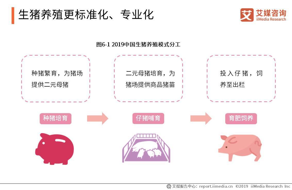 人工智能与养猪产业结合:AI养猪
