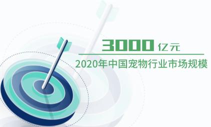 宠物行业数据分析:2020年中国宠物行业市场规模达3000亿元