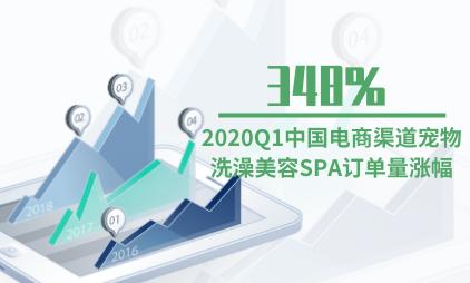 电商行业数据分析:2020Q1中国电商渠道宠物洗澡美容SPA订单量涨幅为348%