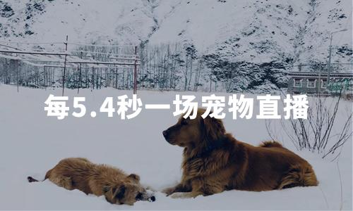 每5.4秒一场宠物直播,2020中国宠物经济发展现状及趋势分析