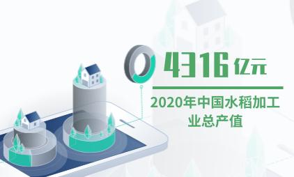 农业数据分析:2020年中国水稻加工业总产值将达4316亿元