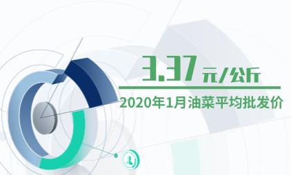 农产品行业数据分析:2020年1月油菜平均批发价为3.37元/公斤