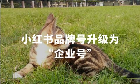 """小红书品牌号升级为""""企业号"""",2019-2020中国社交电商发展现状、小红书用户画像"""