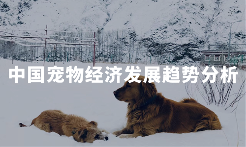 2020中国宠物经济发展现状、用户画像及趋势分析