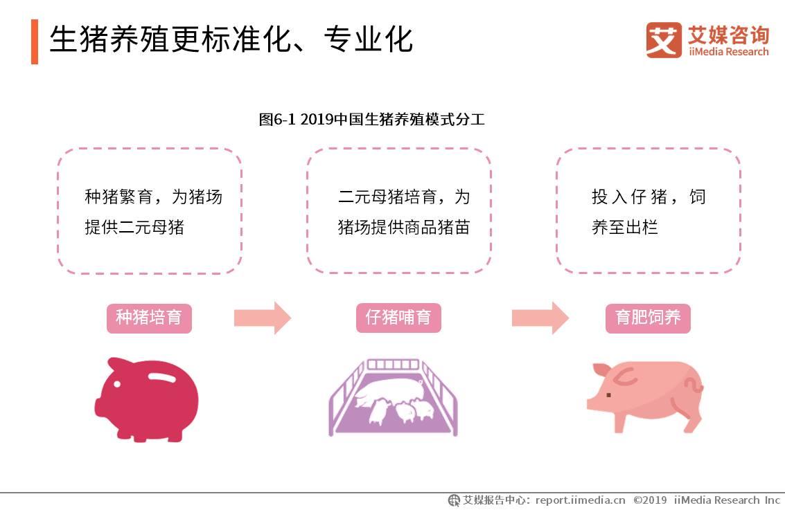 生猪养殖更标准化、专业化