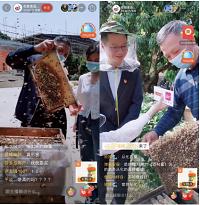 广州从化副区长直播送荔枝树,58万人围观从化蜂蜜产业链