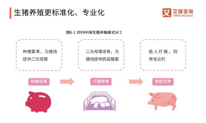 """广东出台""""猪十条"""",市长""""定任务""""养猪,全省分摊3400万头"""