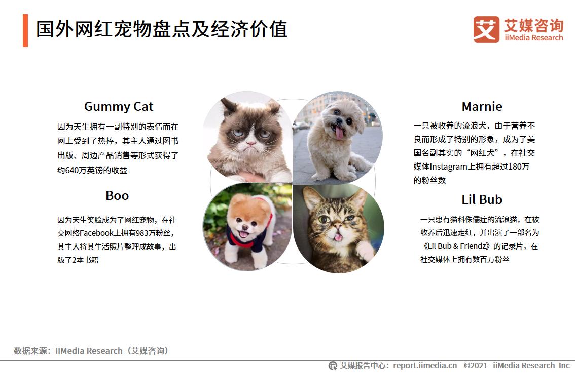 国外网红宠物盘点及经济价值